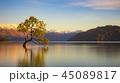 風景 湖 朝の写真 45089817