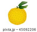 柚子の実 45092206