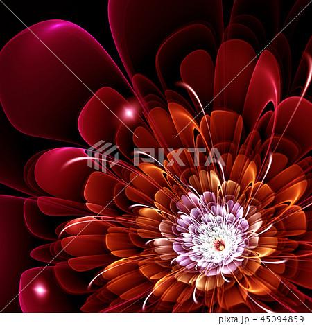 red fractal flower 45094859
