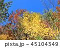 紅葉 晴れ 自然の写真 45104349