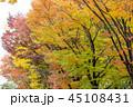 紅葉 自然 秋の写真 45108431
