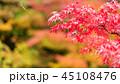 もみじ 紅葉 秋の写真 45108476