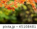 もみじ 紅葉 秋の写真 45108481