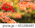 もみじ 紅葉 秋の写真 45108485