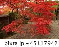 紅葉 箱根美術館 秋の写真 45117942