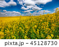 グリーン 緑色 花の写真 45128730