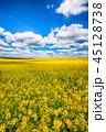 グリーン 緑色 花の写真 45128738
