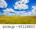 グリーン 緑色 野原の写真 45128852
