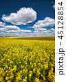 グリーン 緑色 花の写真 45128854