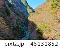 長野県北葛沢の紅葉を空撮 45131852