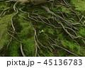 木の根 45136783