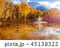 秋 落ちる 落下の写真 45138322