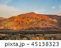秋 落ちる 落下の写真 45138323