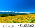 ひまわり・夏イメージ 45163302