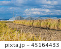 植物 農作物 日本の写真 45164433