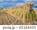 秋 収穫 穀物の写真 45164435