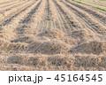 稲 米 農業の写真 45164545