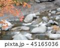 梅ヶ島温泉の紅葉 45165036