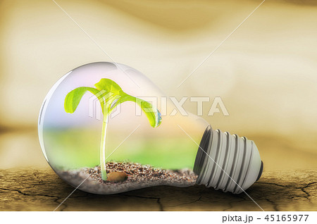 Light bulb with sprout inside 45165977