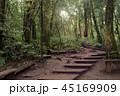 森林 林 森の写真 45169909