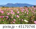 赤城山 コスモス 山の写真 45170746