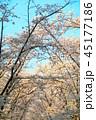 秋ヶ瀬公園(埼玉県さいたま市)の桜の風景 45177186