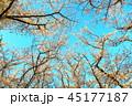 秋ヶ瀬公園(埼玉県さいたま市)の桜の風景 45177187