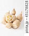 レンコン 野菜 根菜の写真 45178828