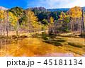 《長野県》秋の上高地・田代池 45181134