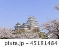 姫路城 春 桜の写真 45181484