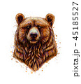 Portrait of a brown bear head from a splash of watercolor 45185527
