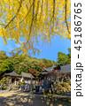 大窪寺 本堂と大銀杏 45186765