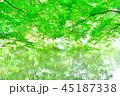 新緑と池 45187338