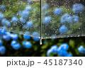 紫陽花と雨 45187340
