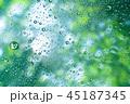 新緑と雨粒 45187345