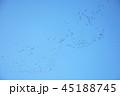 青空と鳥 45188745