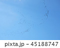 青空と鳥 45188747