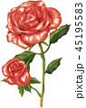 バラ 植物 花のイラスト 45195583