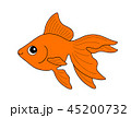 金魚 琉金 魚のイラスト 45200732