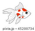 金魚 琉金 魚のイラスト 45200734