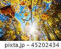 葉 森林 林の写真 45202434