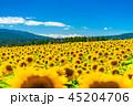 ひまわり・夏イメージ 45204706