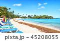 ビーチ 海 ヤシの写真 45208055