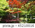 木 林 自然の写真 45210016