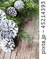 マツボックリ 松かさ 松毬の写真 45214393