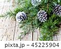 マツボックリ 松かさ 松毬の写真 45225904