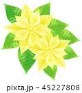 ポインセチア ベクター 植物のイラスト 45227808