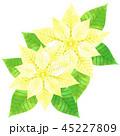 ポインセチア ベクター 植物のイラスト 45227809