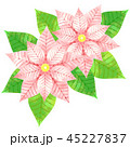 ポインセチア ベクター 植物のイラスト 45227837