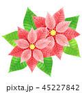 ポインセチア ベクター 植物のイラスト 45227842